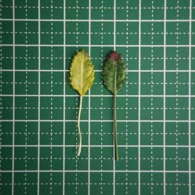 画像5: 葉っぱM(10本)